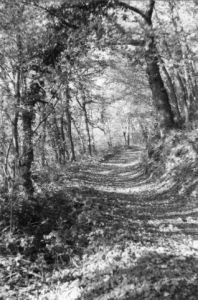 Photo de Renatus: Ombrages d'un chemin forestier