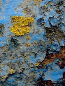 Photo de SYRIELLE: Lichen