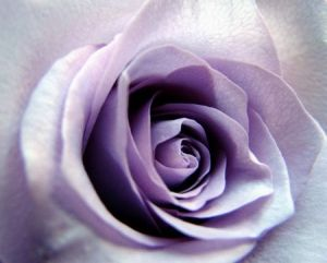 Photo de SYRIELLE: Coeur mauve