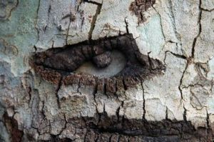 Photo de Ginette BRUNEL: Regard d'arbre