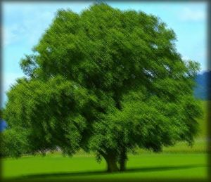 Photo de ml: arbre