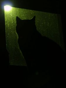 Photo de olympia: Chat de nuit