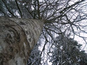 Photo de olympia: L'arbre a froid