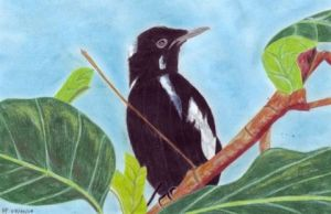 Oeuvre de Chtipat: Magpie robin