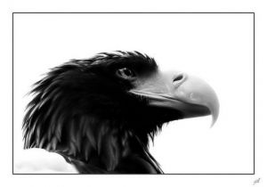 Photo de gil: regard d'aigle
