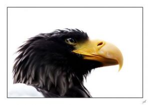 Photo de gil: regard d'aigle en couleur.
