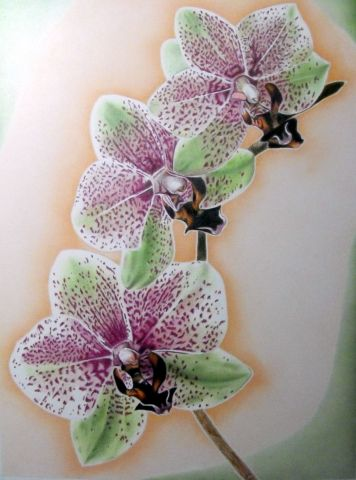 Orchid e dessin severine noirot pictures - Dessin d orchidee ...