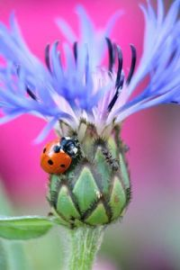Photo de Sebastien Bazin: Coccinelle et fourmis