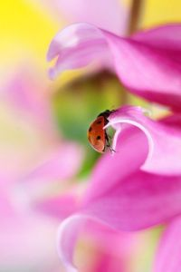 Photo de Sebastien Bazin: Coccinelle