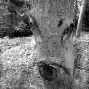 Photo de Paul BENICHOU: l'arbre Biche