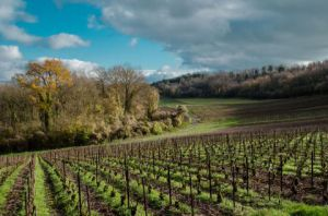 Photo de Lymatly Photos: Paysage de Champagne