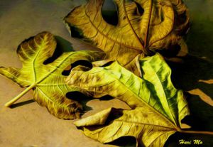 Photo de harimoart: feuilles mortes 2
