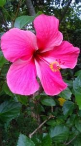 Photo de Beyla Lavana: Hibiscus