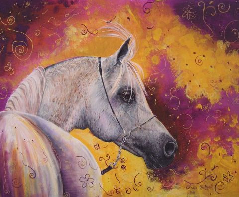 claire ortelli - CHEVAL ARABE