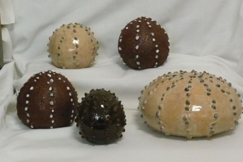 Moixart May - Sea urchins