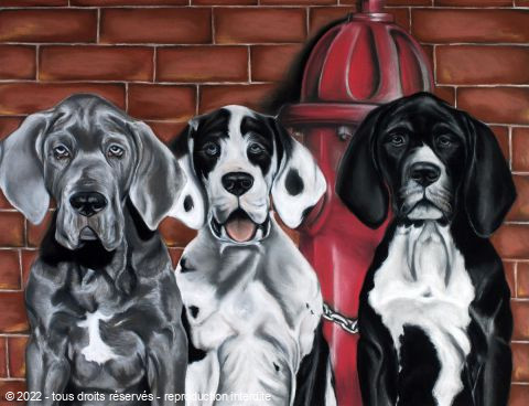 Helene Roux - Chiots Dogues Allemands