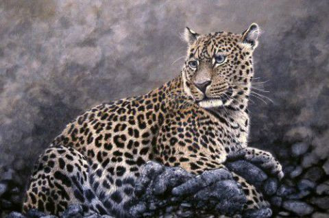 georges rossi - leopard couch� ...