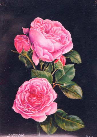Jacques MONCHO - Roses anciennes