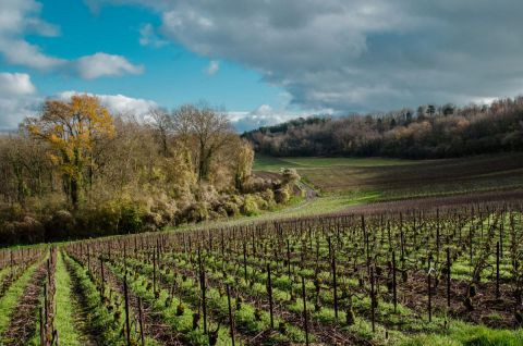 Lymatly Photos - Paysage de Champagne