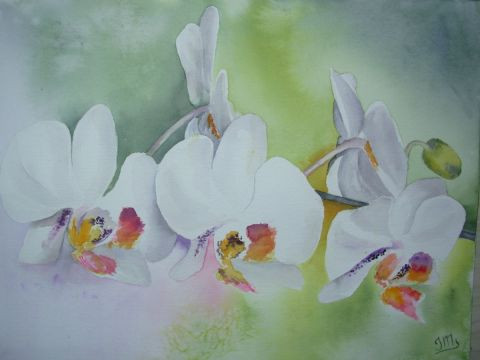 Jacques Masclet  - orchidees blanches