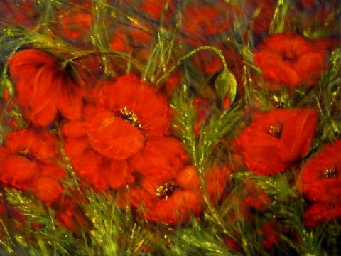 Suzanne ACCARIES - Les coquelicots