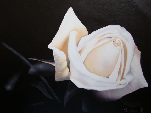 Claudine Friant - Rose blanche
