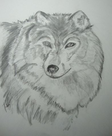 Nabou - Wolf